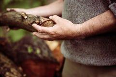 Man holding a tree trunk. Stock Photos