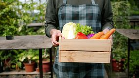 Close-up of male hands holding wooden box of vegetables in greenhouse. Farmer is walking carrying harvest. Farming, organic food and healthy lifestyle concept stock footage