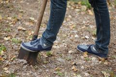 Man plants a tree, a young male with a shovel digs the ground. Nature, environment and ecology concept. Royalty Free Stock Image