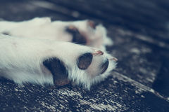 Close-up of mammal`s paws and white hair Stock Image