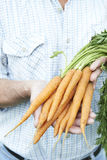 Close Up Of Man Holding Freshly Picked Carrots Royalty Free Stock Image