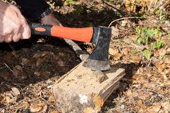 Close-up Man`s arms Cut Wooden Stick With An Ax. Close-up man`s hands cut wooden stick with an ax on the hive in forest. Cutting edge. Falling autumn leaves in royalty free stock photo