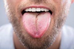 Close-up Of A Man`s Tongue. Close-up Of A Man Showing His Tongue royalty free stock photos