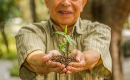 Close up of man using two hands holding and caring a young green plant, planting tree, growing a tree, love nature, save. The world, in a blurred nature Royalty Free Stock Photo