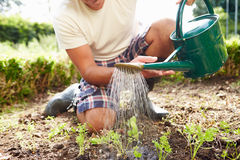 Close Up Of Man Watering Seedlings In Ground On Allotment Stock Photography