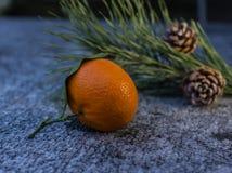 Close Up mandarin in the winter evening Stock Image