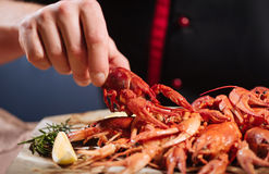 Close up of mans hands holding a crayfish in restaurant Stock Images