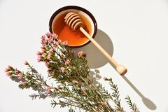 Manuka honey and tree close up Stock Photo