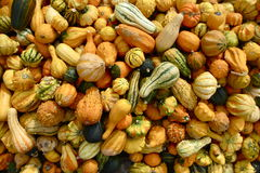 Close-Up of Many Autumn Gourds. Dozens of orange, green, and white gourds (or gords) on display for autumn and Halloween Royalty Free Stock Photography