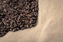 Close up  many coffee  beans  background studio shot Royalty Free Stock Photos