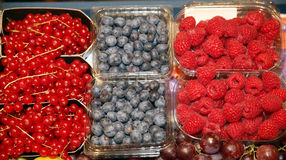 Close up of many colorful fruits on market stand. Big assortment. Collection of currants, blueberries, raspberries in plastic boxes Royalty Free Stock Images
