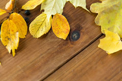 Close up of many different fallen autumn leaves Royalty Free Stock Image