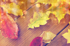 Close up of many different fallen autumn leaves Royalty Free Stock Photography