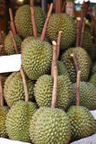 Close up many durian Royalty Free Stock Photo