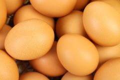 Close up of many fresh eggs. Whole background stock images