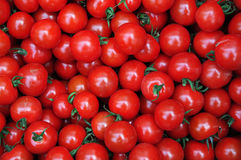 Close up of many fresh red tomatoes. Big fruit type royalty free stock image
