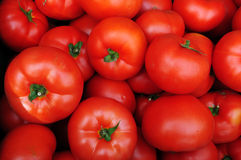 Close up of many fresh red tomatoes. Big fruit type Stock Photography
