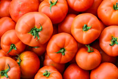 Close up of many fresh red tomatoes Stock Photos