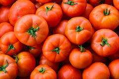 Close up of many fresh red tomatoes Royalty Free Stock Photography