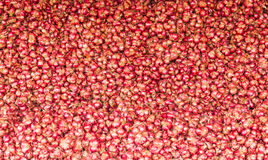 Close up of Many heads of red onion Royalty Free Stock Photos