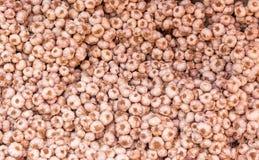 Close up of Many heads of white purple garlic Stock Photo