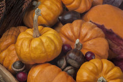 Close up of many Mini Pumpkins in a Wooden Bowl with Acorns Stock Photo