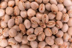 Close up of many pigeon peas in glass container. Cajanus cajan is known by names such as , gungo, kardis, gandule bean, pigeon peas and originated from india royalty free stock photography