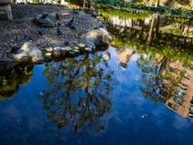 Close up of many pigeons near of an artificial pond in a park in Kamakura in Tokyo Japan Stock Images