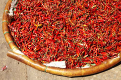 Close up many red chili Royalty Free Stock Image