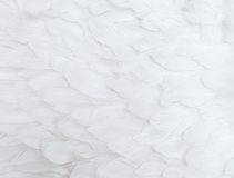 White Feathers. Close up of many soft white feathers stock image