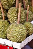 Close up many thai durian Royalty Free Stock Images