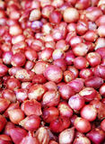 Close up many thai onion Royalty Free Stock Image