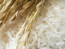 Close up marco rice plant  and white rice Royalty Free Stock Photos