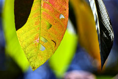 Close up marco shot leaf in autumn season show the natural Stock Photos