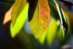 Close up marco shot leaf in autumn season show the natural Royalty Free Stock Photos