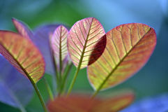 Close up marco shot leaf in autumn season show the natural Royalty Free Stock Images