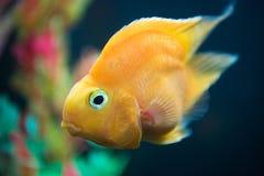 Close up Marine fishes royalty free stock image