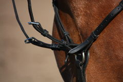 Close up of martingale on brown horse Royalty Free Stock Photo