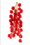 Close-up mature and nutritious red currant, isolated on a white background. Fresh and sweet bright red berry. Stock Images