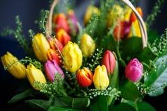 Close-up photo of tulip bouquet, colorful flowers, spring mood. Close-up mcro photo of tulip bouquet, colorful flowers, spring mood Royalty Free Stock Photos