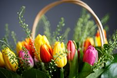 Close-up photo of tulip bouquet, colorful flowers, spring mood. Close-up mcro photo of tulip bouquet, colorful flowers, spring mood Stock Photography