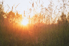 Close up meadow grass in evening sunlight Stock Photo