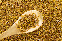 Close up mealworm feed for animals in wooden spoon in the mark stock photos