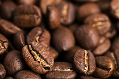 Close-up of medium roasted coffee beans Royalty Free Stock Image