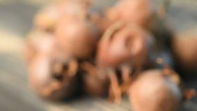 Close-up medlar fruits (focusing) stock footage