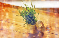 Close up of melissa in basket on wooden table. Botany, summer, gardening and herbs concept - close up of fresh melissa in wicker basket on wooden table royalty free stock photos