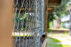 Close-up Metal fence wire. Close-up Metal fence wire natural background blur Stock Images