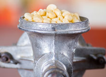 A close up from a metalic mill with some corn kernels.  Stock Photo