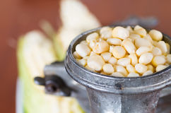 A close up from a metalic mill with some corn kernels.  Royalty Free Stock Photos