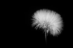 Close up 5. A metaphor in black and white. An abstract world. A close up of a wild plant. November stock photos